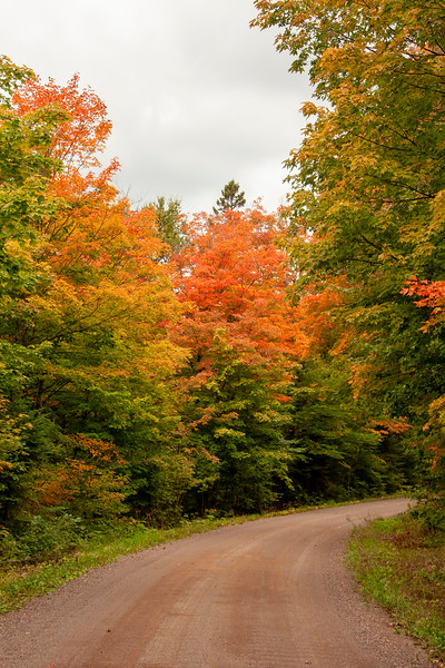 A side road off the Caribou Trail gave us close-up views of these colorful trees.
