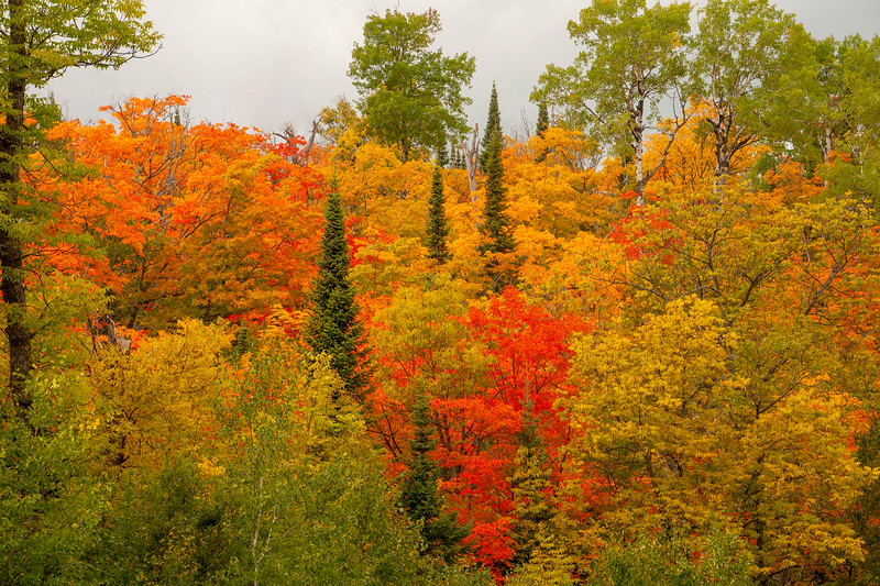 Here's another photo from the Caribou Trail with a pleasing mixture of yellow, orange, and red leaves.