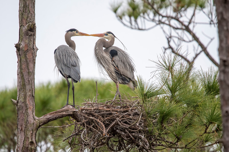 He gets up his courage and gives her a little peck on the beak.
