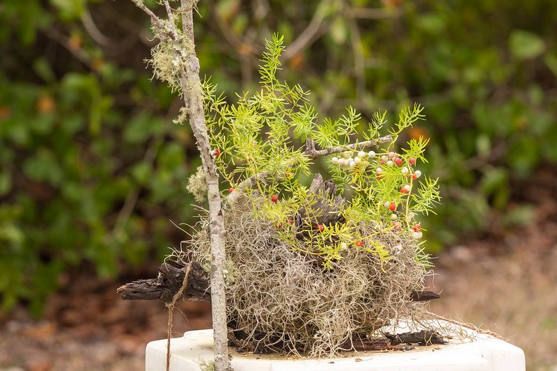 This past week, I set up a perch at the house we are renting on St. George Island, Florida.  My goal was to attract some of the local birds and photograph them in a nice-looking setting.  I put a log (mostly hidden in the photo) on a table, added some Spanish Moss and an interesting stick.  For a bit of color, I found some spiky greenery with red and white berries.  I posted a photo of the greenery to a plant identification site and found out it is Asparagus Fern (Asparagus aethiopicus).  I put bird seed in the hollowed-out log (just below the white berries) and got my camera ready.