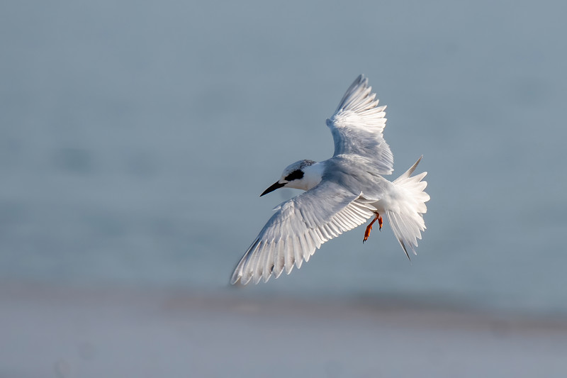 This top view photo captures the intricate feather detail of the tern.