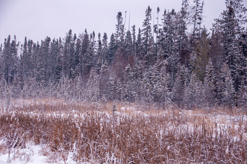 The snow gave a nice wintery look to the trees and cattails.  Next week I'll show you some of the birds I saw in the Bog.