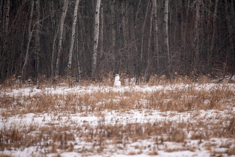 A Snowy Owl was seen in this field the day before I got there, and I was excited when I thought I spotted it.  However, when I looked through my binoculars, I realized this was just a pile of snow.
