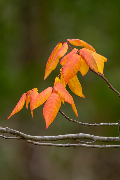 """I wasn't expecting to see """"fall colors"""" in Florida but I did find a few colorful leaves on St. George Island."""
