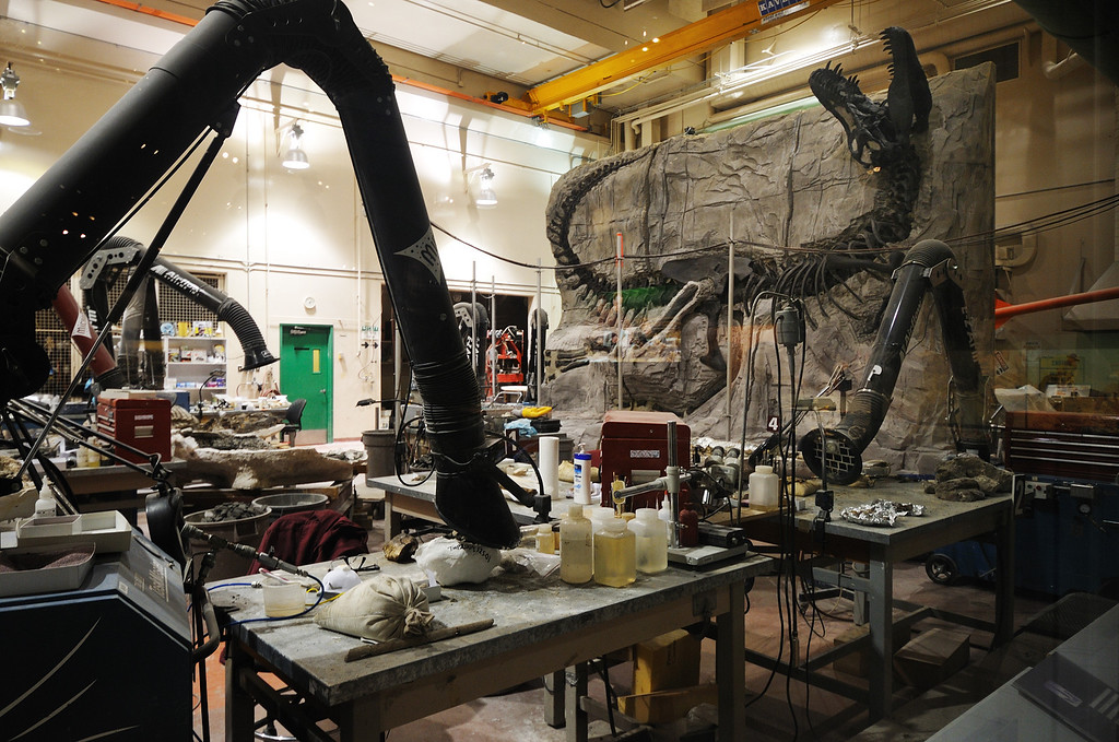 Lab in the Royal Tyrell Museum where they prepare fossils.