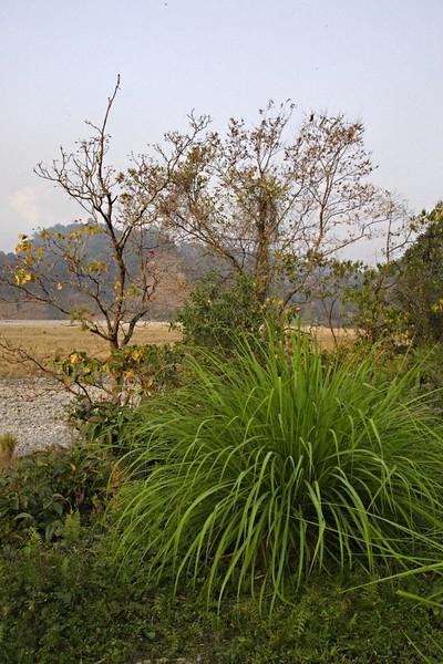 Namdapha tiger reserve in the northeastern Indian state of Arunachal Pradesh