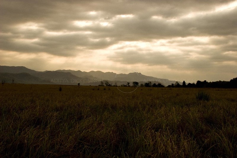 The grasslands of Dhikala chaur in Corbett tiger reserve on an overcast day