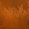 Grassland in Golden light