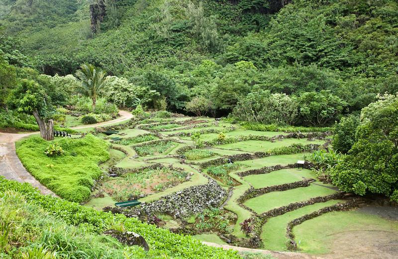 Ancient terraces, Limahuli Garden, Kaua'i