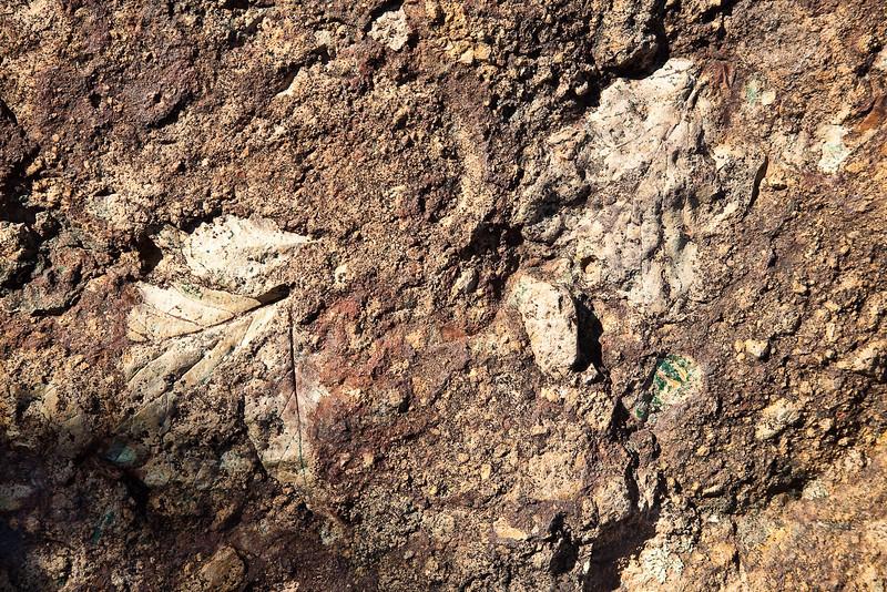 Leaf fossils, Clarno Unit