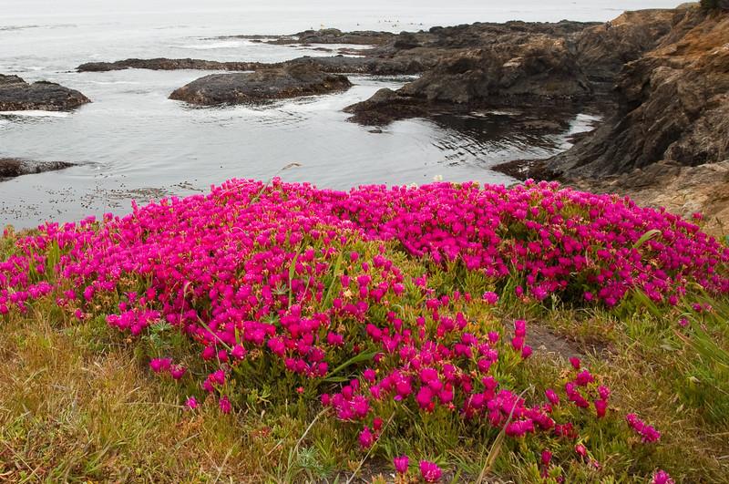 Wildflowers on headlands