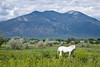 White Horse and Taos Mountain