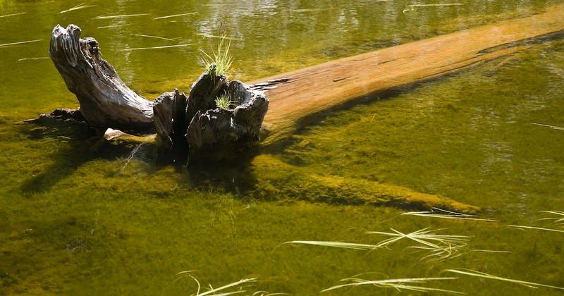 Log in water