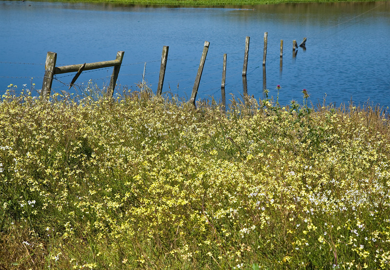 Wildflowers, fence and marsh