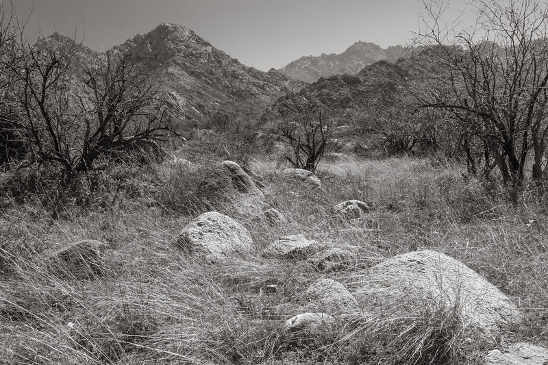 Pusch Ridge from Catalina State Park