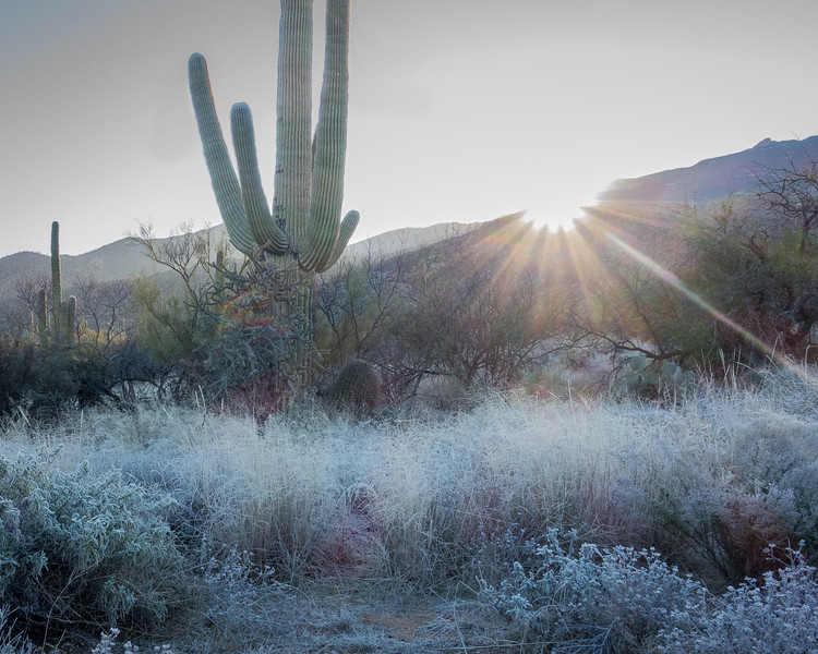 Morning frost, Saguaro National Park, East Unit