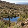 Desert Pool