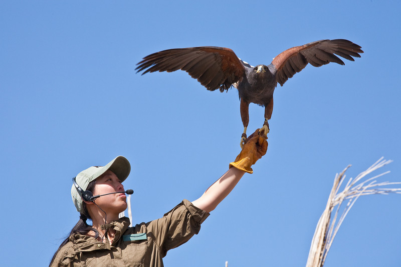 Raptor demonstration