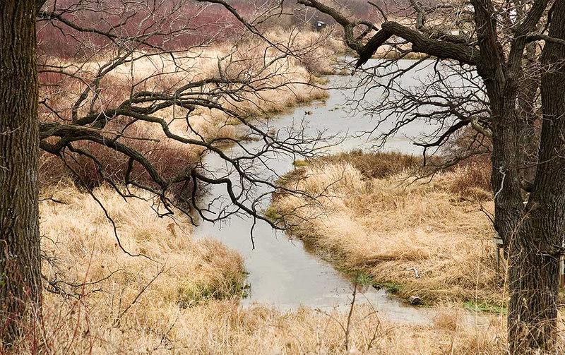 Pheasant Branch