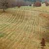 Stripes in hay field
