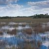 Saw grass prairie, Everglades