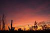 Sunset, Desert Botanical Garden