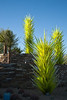 Dale Chihuly glass sculptures at the Desert Botanical Garden