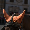 Horse with orange cap