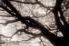Morning light through branches