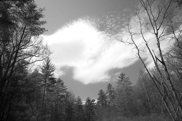 Cloud over woods