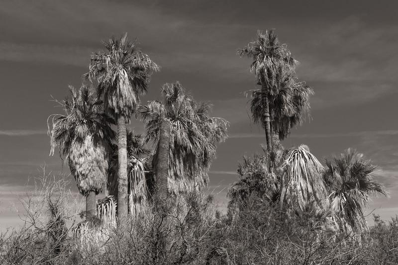 Oasis of Mara