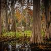 Cypress, Charleston, South Carolina