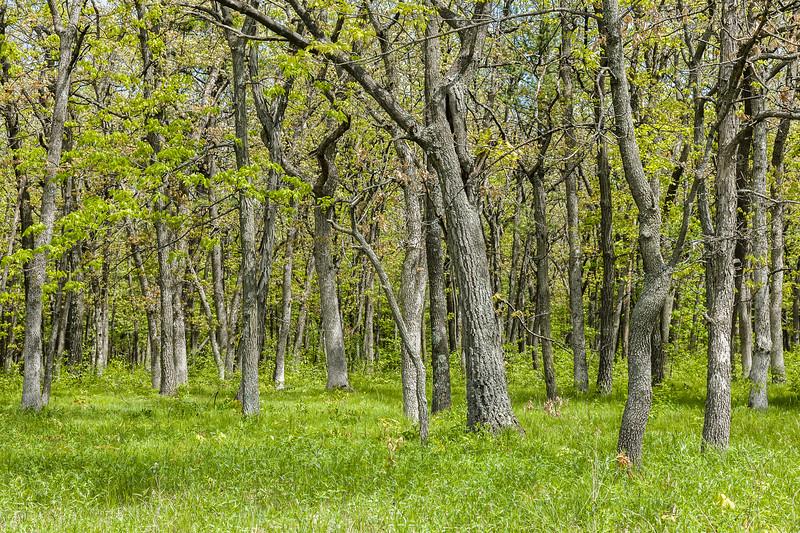 Devil's Lake State Park, Wisconsin