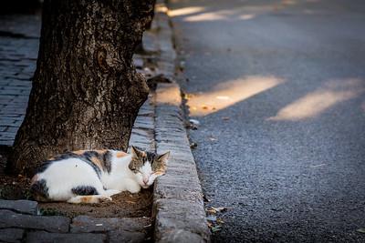 Tabby sleeping next to the road on Buyukada