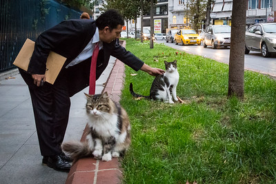 Business man stops to pet the cats.