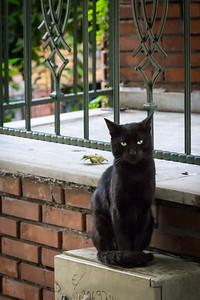 Black cat in residential neighborhood