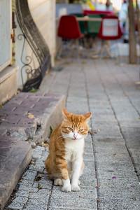 Tough orange tabby cat