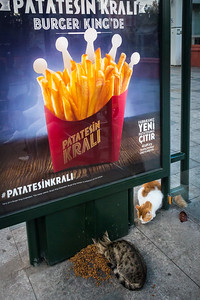 Cats enjoying food left for them at a bus stop with Burger King ad