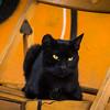Black Cat in Galata
