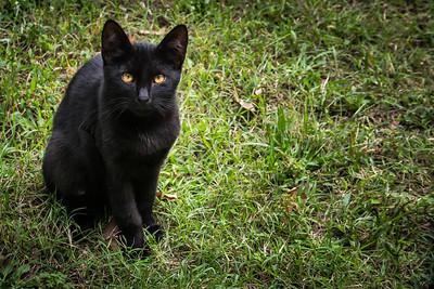 Black Cat near Nişantaşı