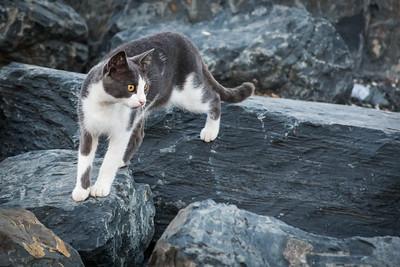 Grey tabby on the shore of Iskele Yolu