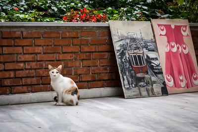 Artistic calico cat