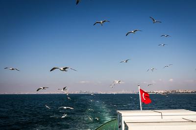 Seagulls following ferry