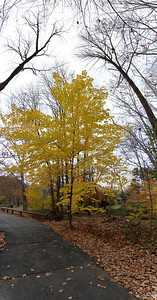 Vertical panorama of a tree in the woods. View it in full resolution here: http://photos.kevinworkman.com/Pictures/2011/i-t26rcmj/0/O/TreePanorama2.jpg