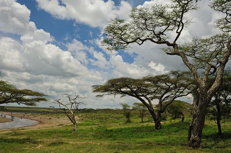 Woodlands in Ndutu, Ngorongoro conservation area in north Tanzania