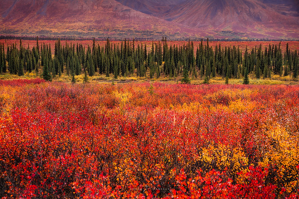 Fall colors near Denali