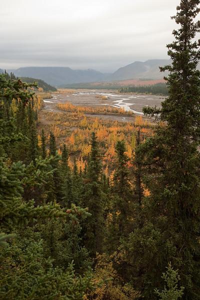River in Denali National Park