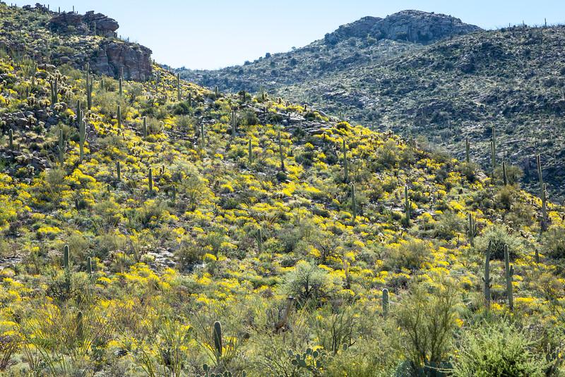 Saguaro National Park-Rincon Mountains