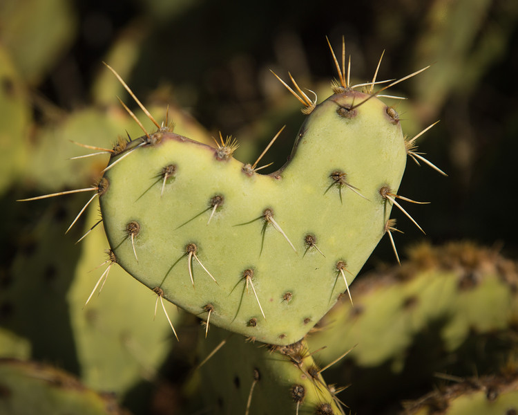 A prickly heart