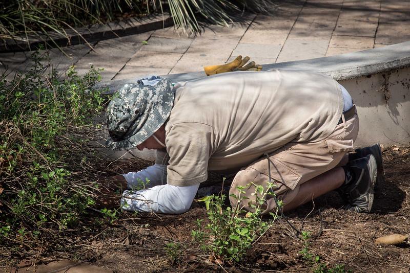 Gardener at work in Tohono Chul, Tucson